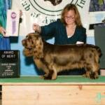 Carver  - GCH Remedi Maritime Stern Star Award of Merit  at the 2008 National Specialty! Multi Group Placing dog ,