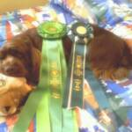 I am exhausted, a very big day at the dog show!